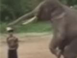 Elephant plays soccer!