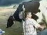 Dude is trying to milk a cow
