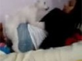Dog likes her pussy