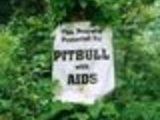 Pitbull with aids