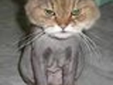 Styled cat